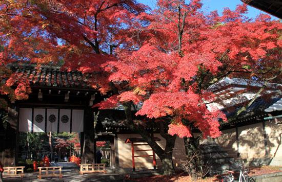 14紅葉めぐり 54 今宮神社_e0048413_19503189.jpg