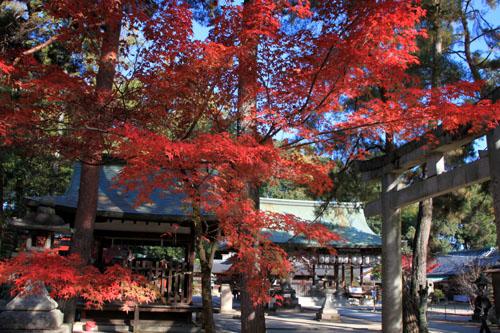 14紅葉めぐり 54 今宮神社_e0048413_1951056.jpg