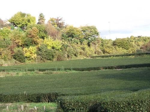 晩秋の菜園...こんなところです。_b0137932_11581887.jpg
