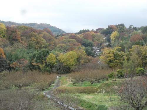 晩秋の菜園...こんなところです。_b0137932_15205937.jpg