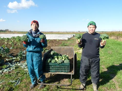『収穫作業』_c0214657_18421259.jpg
