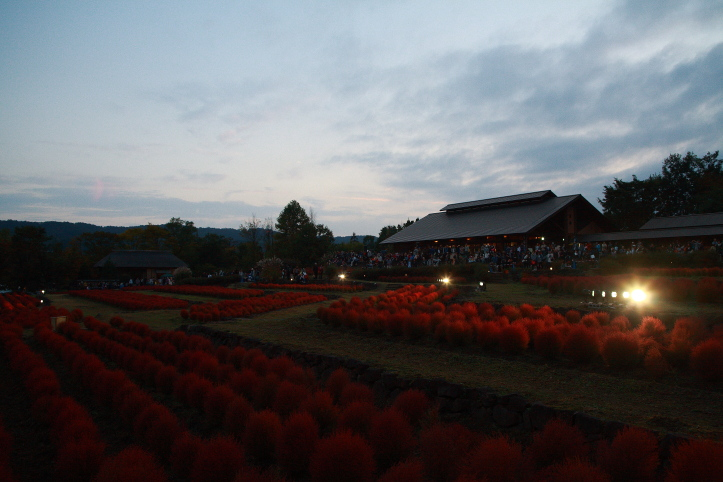川崎町 国営みちのく杜の湖畔公園 コキアカリ 1_e0165983_16384274.jpg