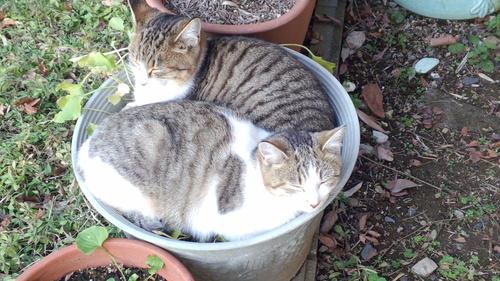 野良猫_e0246300_1341291.jpg