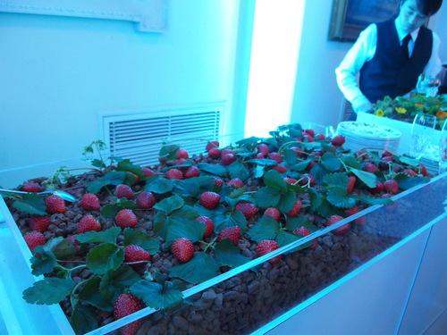 イチゴのパーティフード@英国大使館_a0116902_20583376.jpg