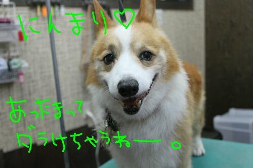 b0130018_15305163.jpg
