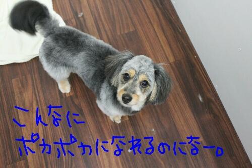 b0130018_15403715.jpg