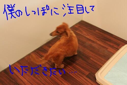 b0130018_15435232.jpg