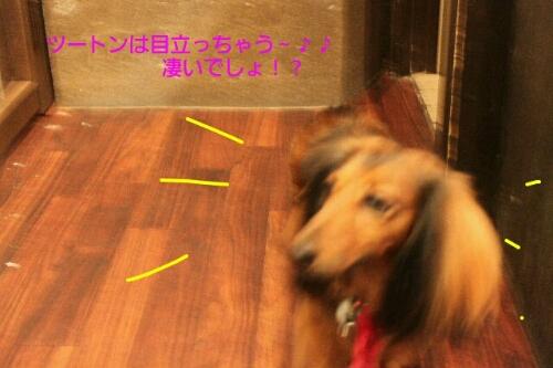 b0130018_1603634.jpg