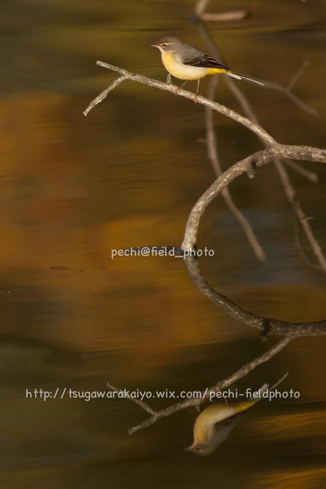 秋色の池にて。_c0001429_212275.jpg
