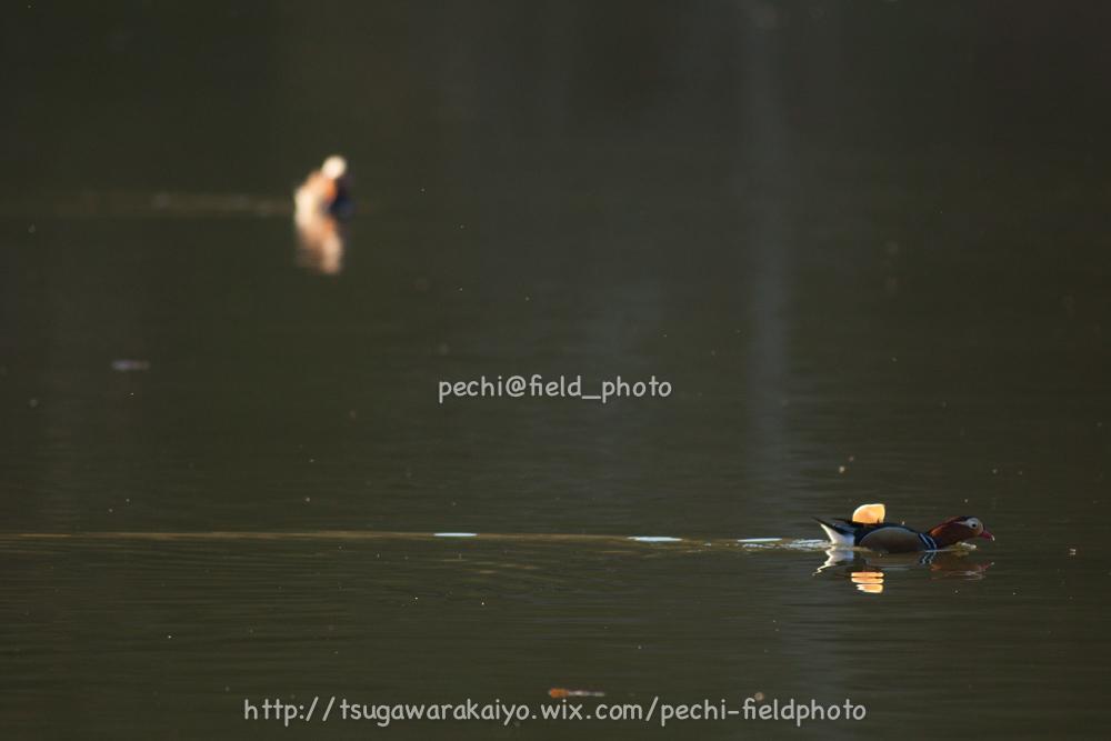 秋色の池にて。_c0001429_2125597.jpg