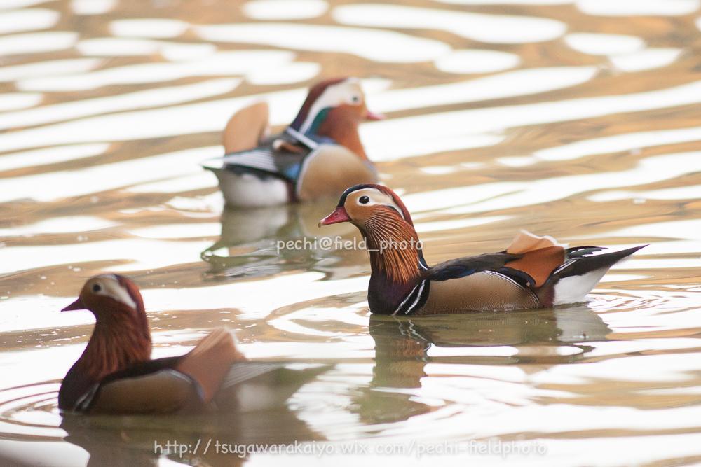 秋色の池にて。_c0001429_2131410.jpg