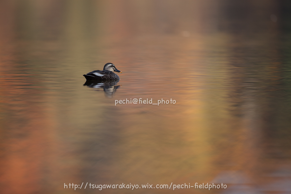 秋色の池にて。_c0001429_2135285.jpg