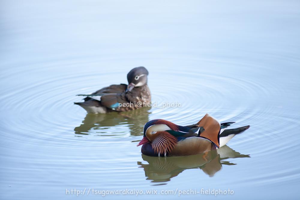 秋色の池にて。_c0001429_2144289.jpg