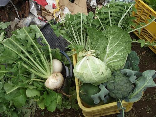 野菜の大量収穫..._b0137932_22484192.jpg