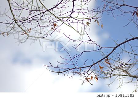 f0192635_2037269.jpg