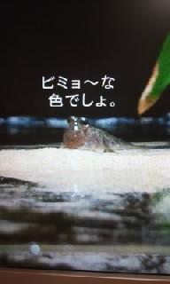 f0200871_011946.jpg