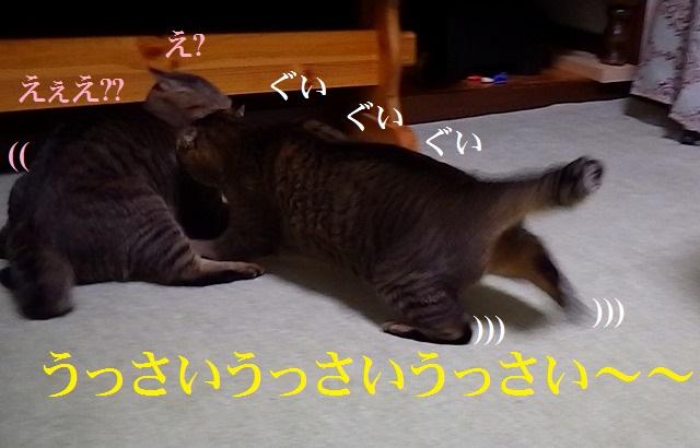 a0159490_1834888.jpg