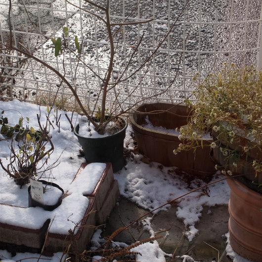 冬。店内は11℃とは。。。_a0292194_11214613.jpg