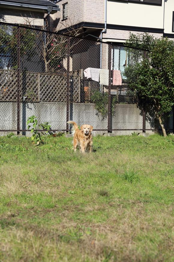 モグラ公園の死闘_b0275998_15203949.jpg