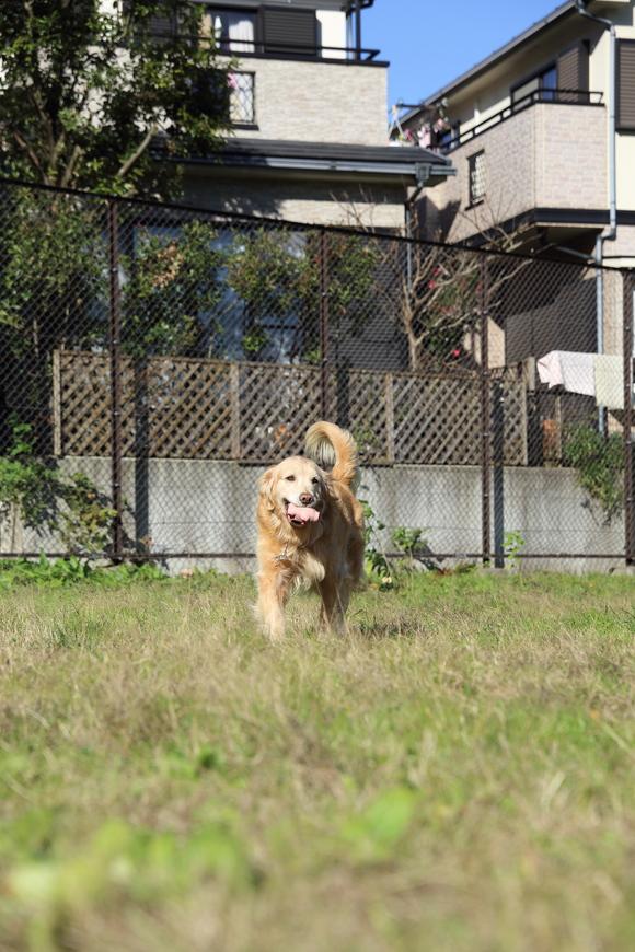 モグラ公園の死闘_b0275998_1522742.jpg
