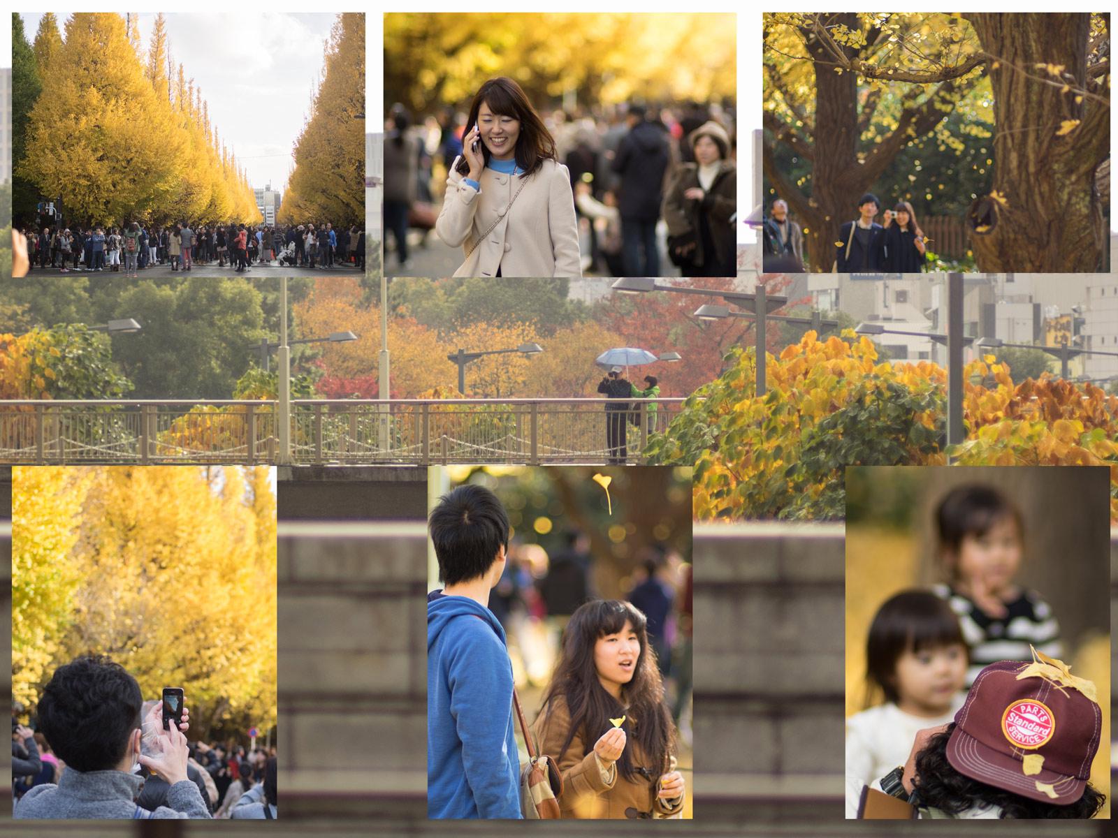 11月最後の日、神宮銀杏祭り。_a0271402_9151458.jpg