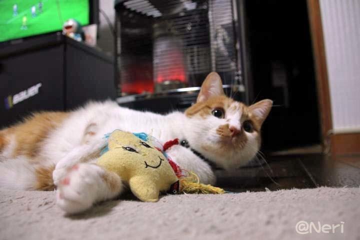【猫】猫とストーブ_f0141609_23080947.jpg