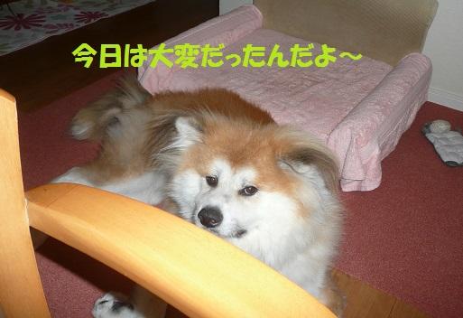 f0121712_1623502.jpg