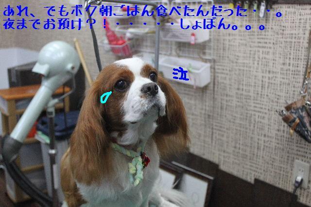 コタツ_b0130018_13304792.jpg