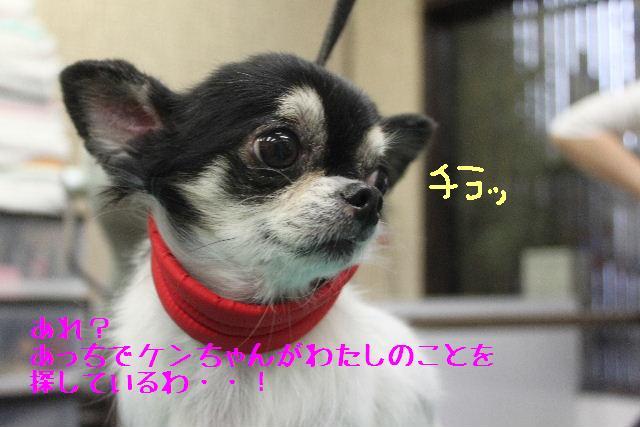 コタツ_b0130018_13341936.jpg