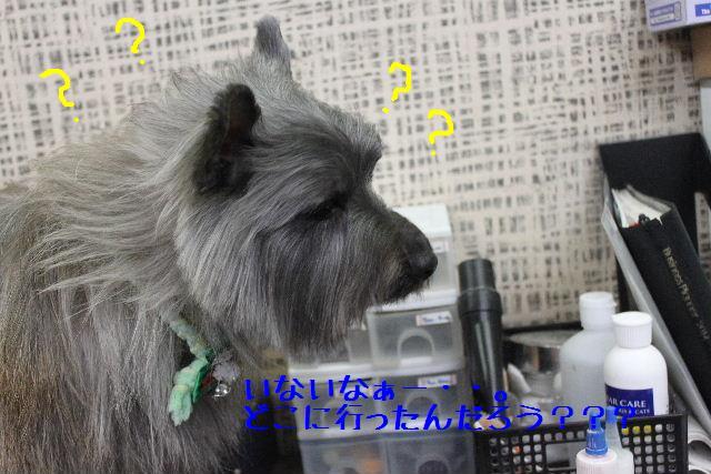 コタツ_b0130018_13344763.jpg