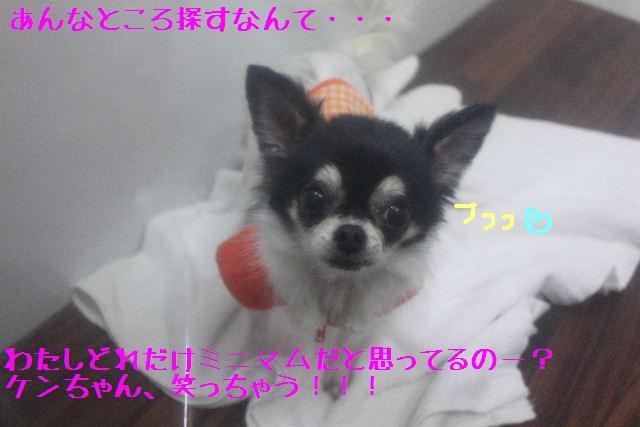 コタツ_b0130018_1335149.jpg