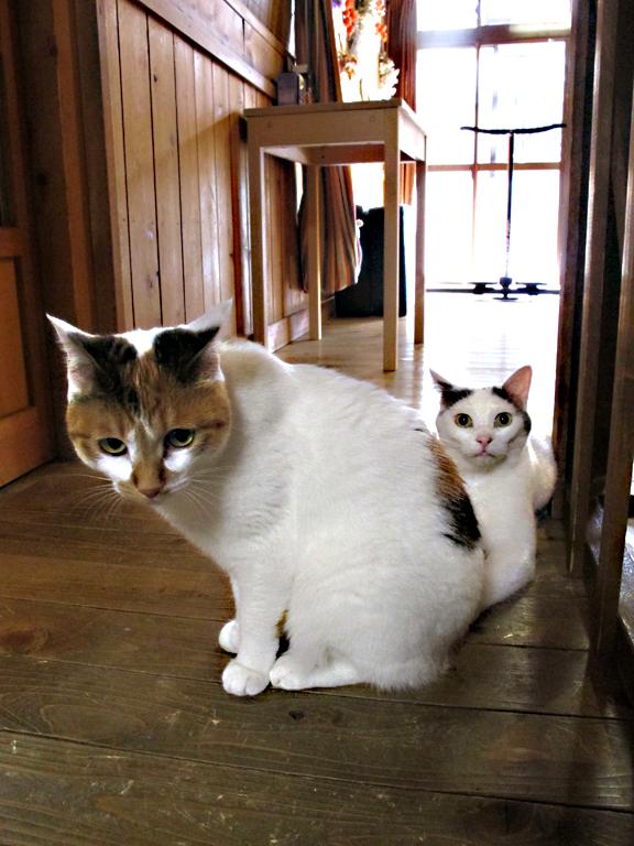 猫の宿 繁盛記⑦  2014/12/09-tue_f0031535_1471752.jpg