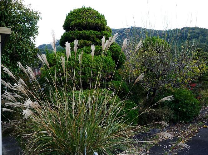 里山の風景_b0093754_2013612.jpg