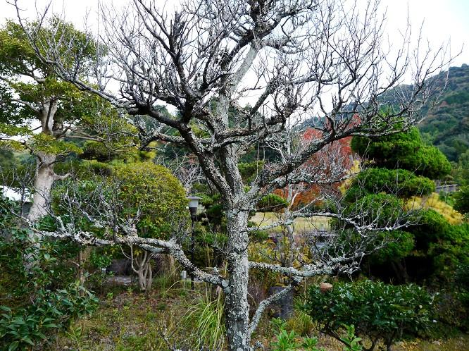 里山の風景_b0093754_2022089.jpg