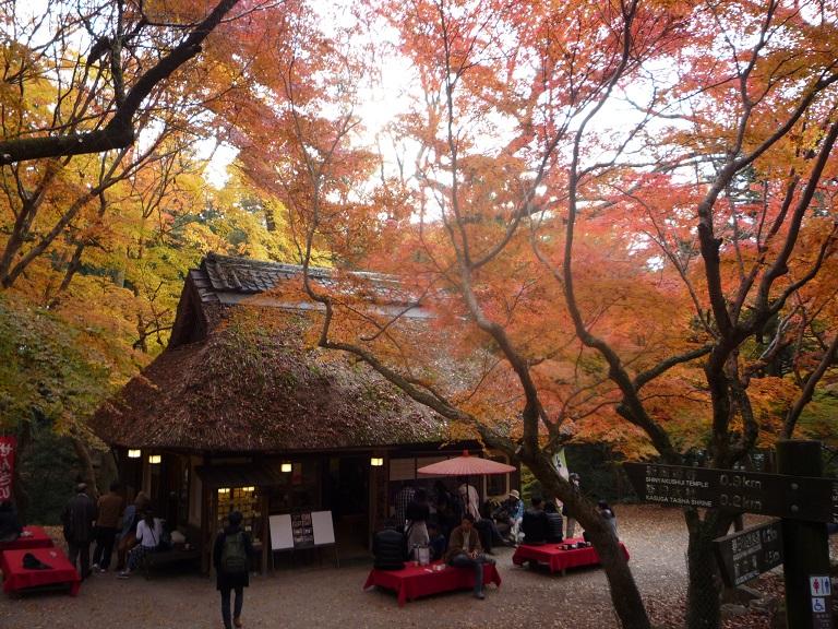 奈良。古事記展と鹿さんたち、たくさんの美しい紅葉にあってきました。_c0086176_9153763.jpg