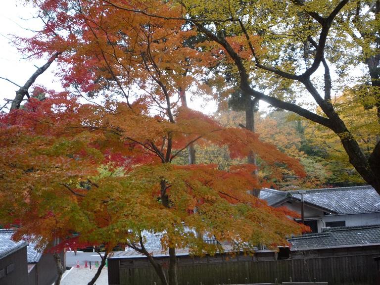 奈良。古事記展と鹿さんたち、たくさんの美しい紅葉にあってきました。_c0086176_91891.jpg