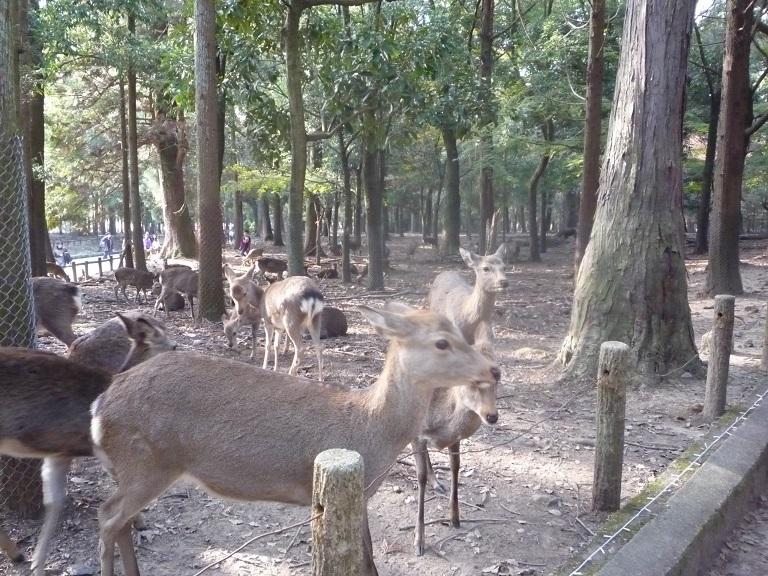 奈良。古事記展と鹿さんたち、たくさんの美しい紅葉にあってきました。_c0086176_994893.jpg