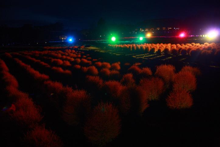 川崎町 国営みちのく杜の湖畔公園 コキアカリ 2_e0165983_2331763.jpg