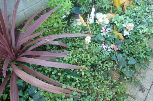 My Garden 2014 冬_c0332287_15024911.jpg