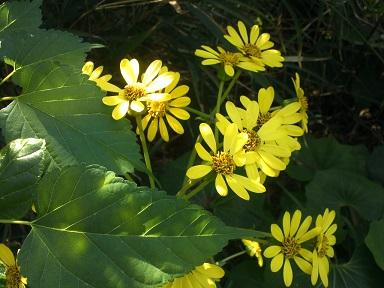 秋のはちみつ 採れました_a0247891_149638.jpg