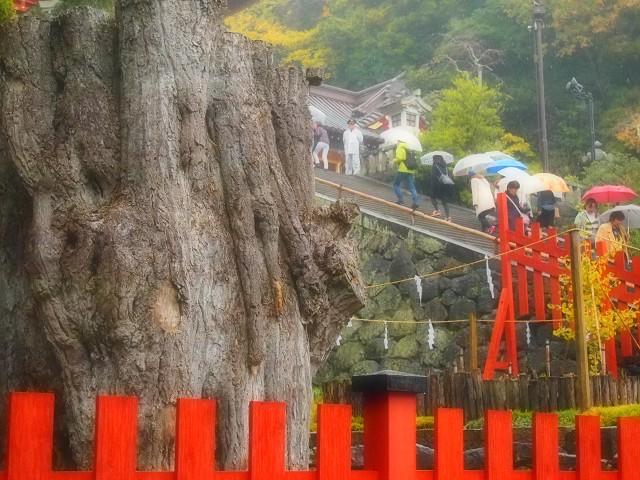 鎌倉の旅 <鶴岡八幡宮Ⅲ>_d0295818_2355870.jpg