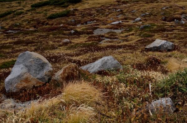 高山の石庭_f0055131_12172397.jpg