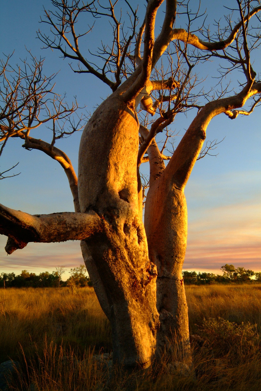 月への階段 西オーストラリア_f0050534_08594762.jpg