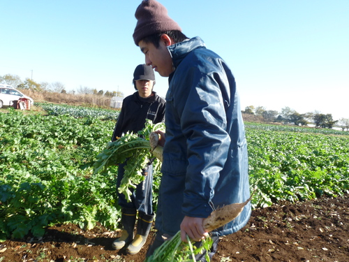 『農作業』_c0214657_18532786.jpg