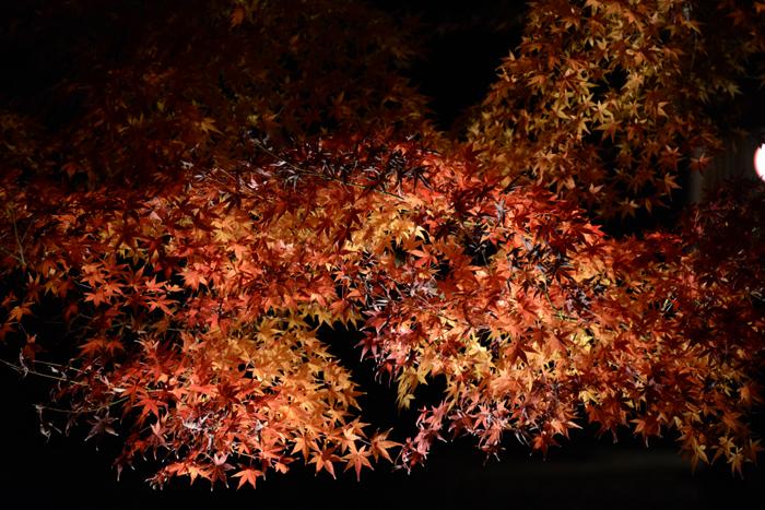 六義園ライトアップ紅葉写真アップ!_e0171573_23291485.jpg