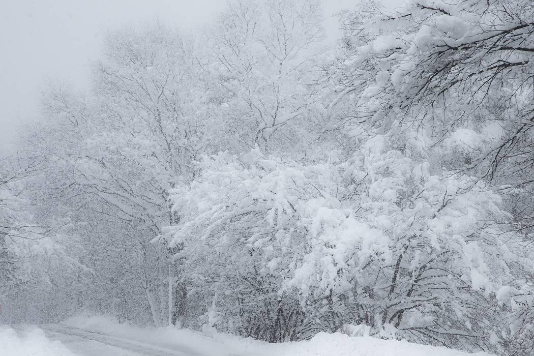 雪は降る_c0077395_15414594.jpg
