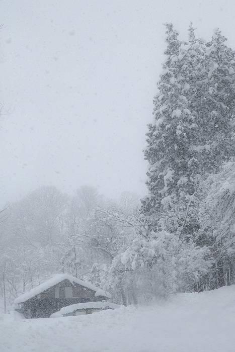 雪は降る_c0077395_15415914.jpg