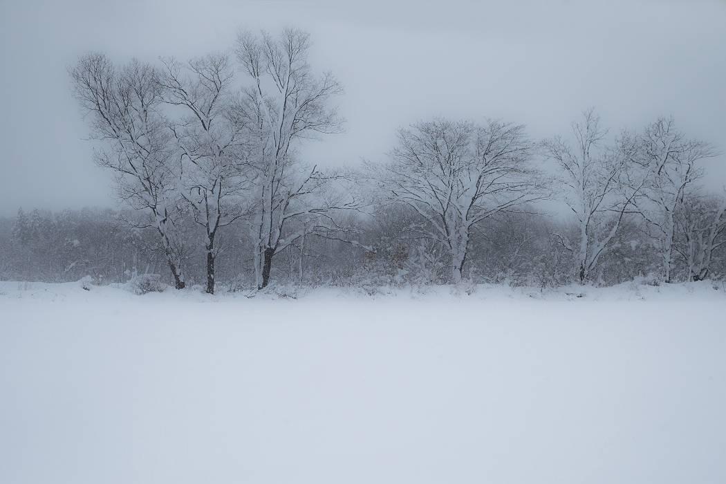 雪は降る_c0077395_15421828.jpg