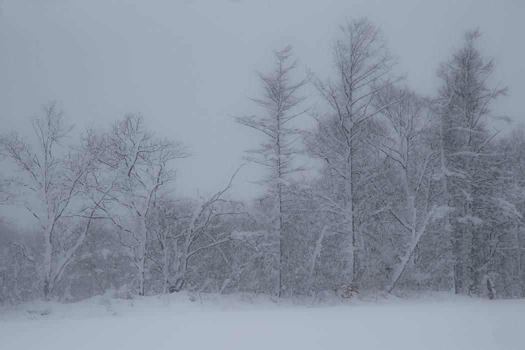 雪は降る_c0077395_15423211.jpg