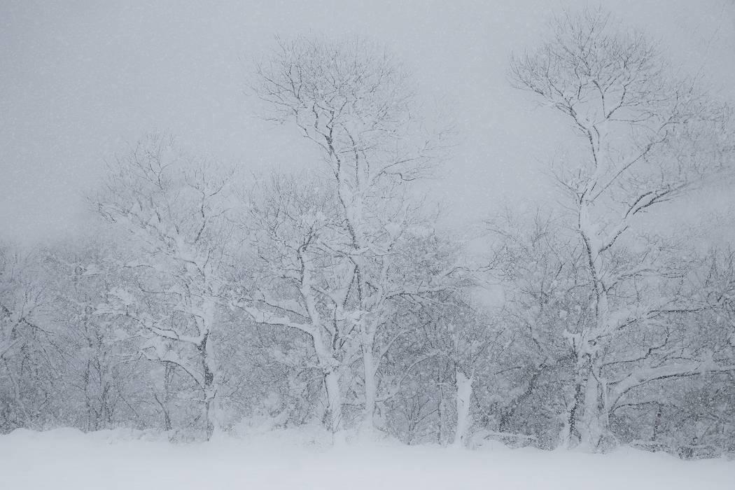雪は降る_c0077395_15424913.jpg